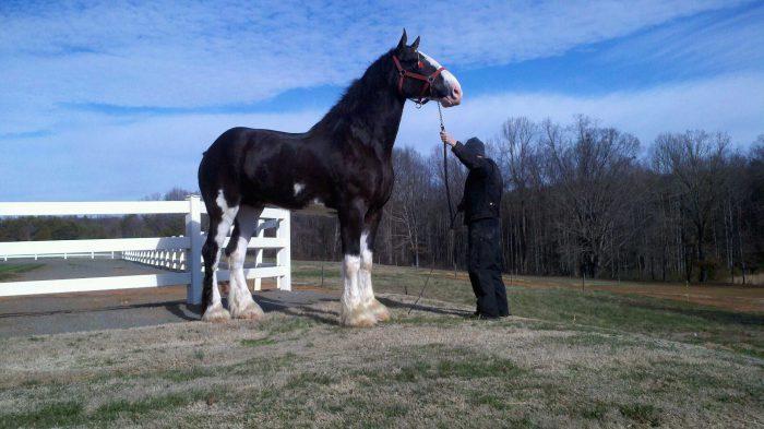 Высокая лошадь