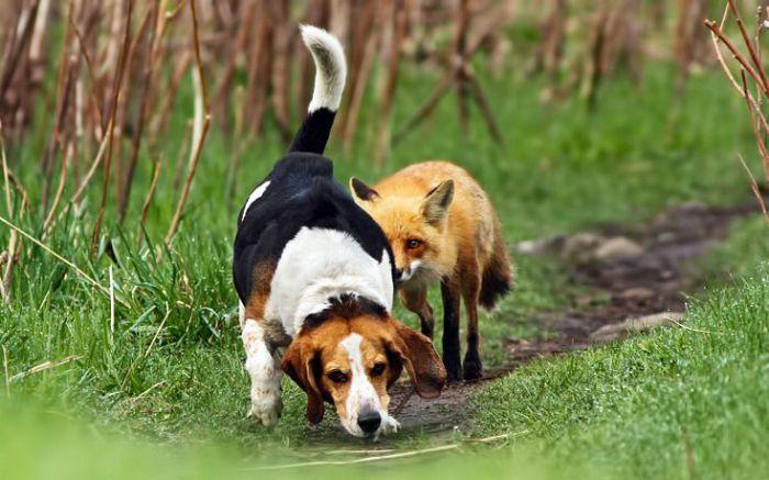 собака берет след