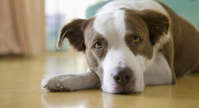 отравления у собак