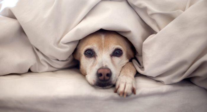 Страхи у собаки