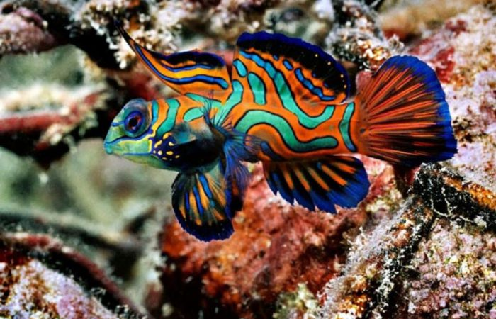 окраска рыб