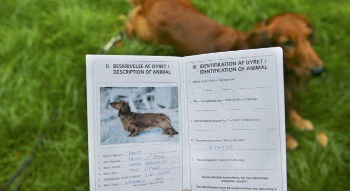 Документы на щенка