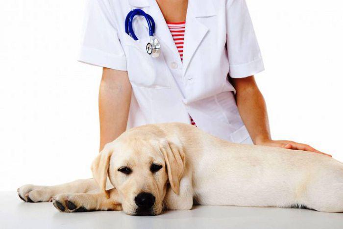 стерилизации собак