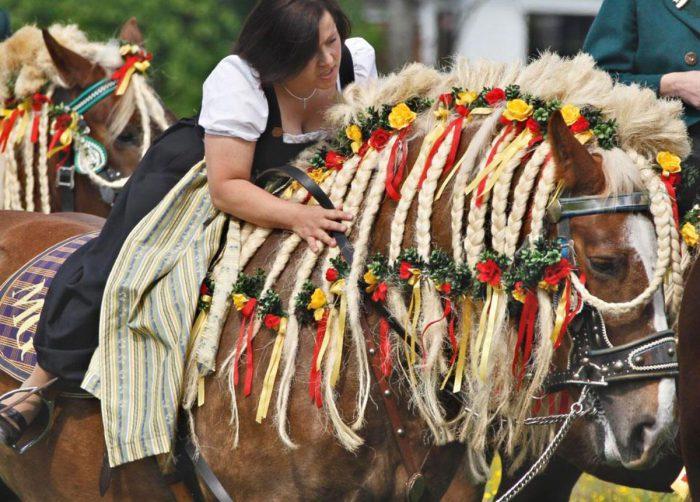 лошади и праздник