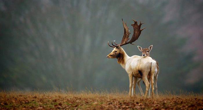 Значение живых организмов в природе