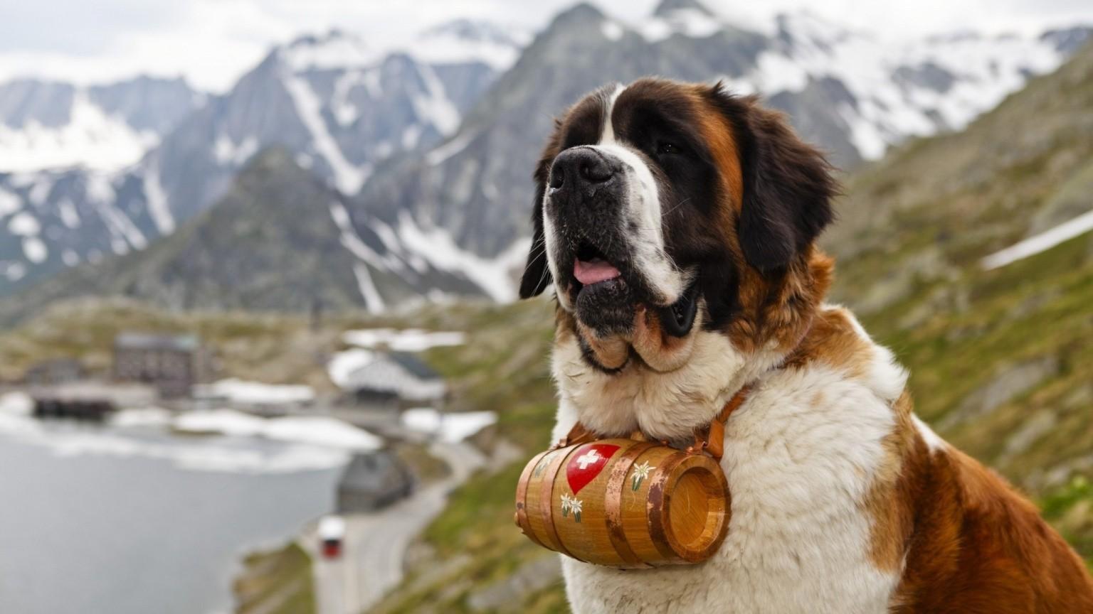 Купить косметику для собак сенбернар avon attitude perfume