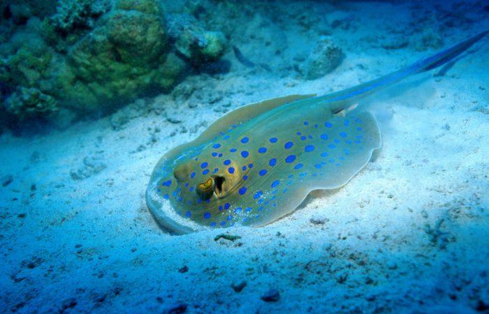 Электрические рыбы