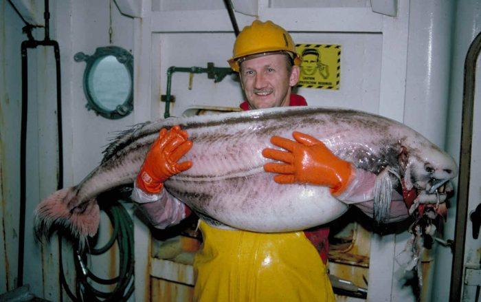 рыба-тряпка
