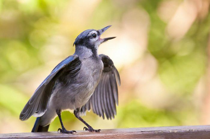 птицы поют