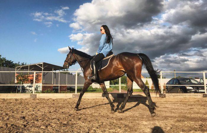 Способы передвижения лошади