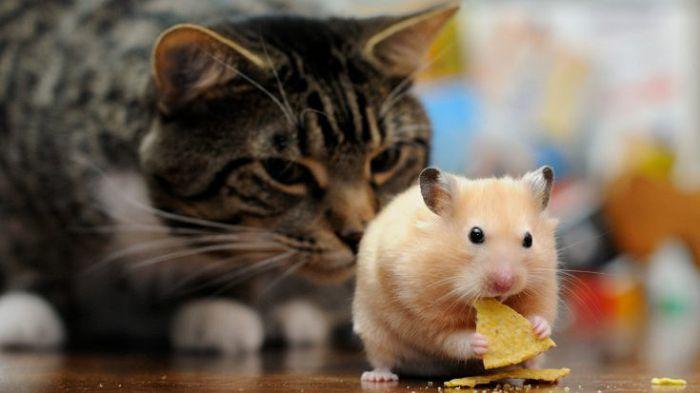 Кошка и грызуны