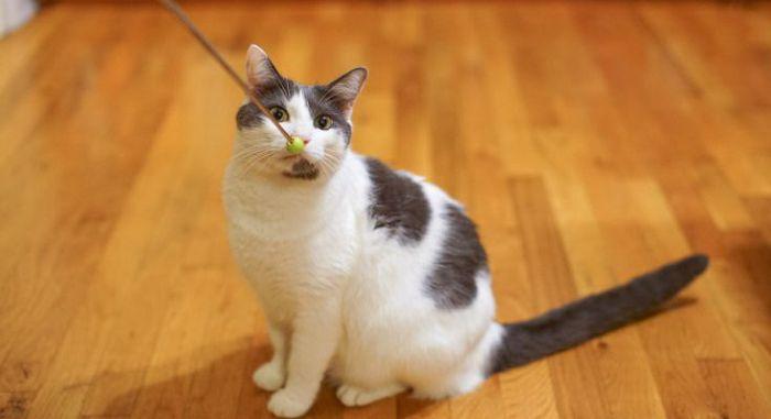 «Дрессировка» кошек