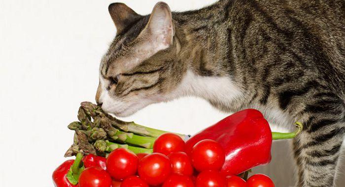 Натуральное питание для кошки
