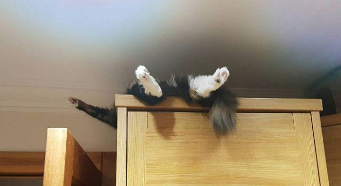 Как отучить кошку спать где попало?