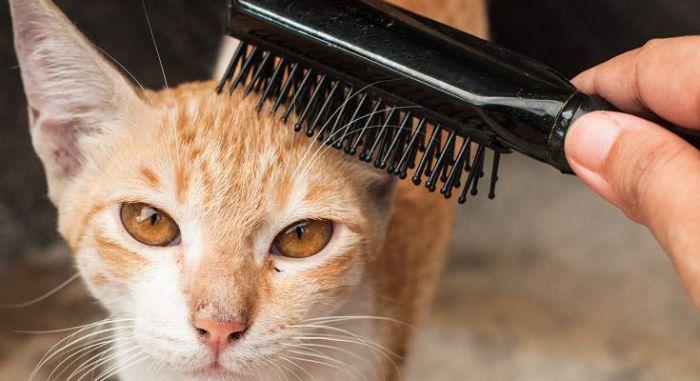 Предметы ухода и снаряжение за кошками