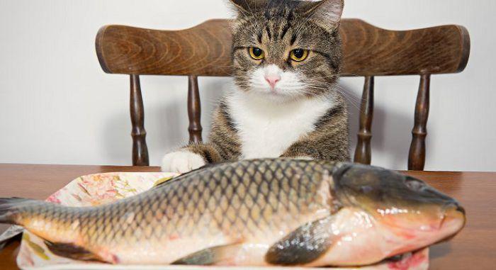 Рыба для кошки