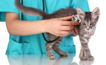 Выбор ветеринара для кошки