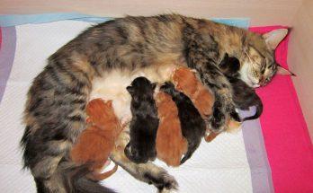 Роды кошки
