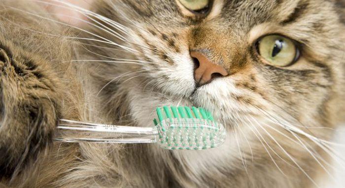 Общая гигиена для кошек
