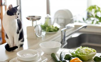 Растительная пища для кошки