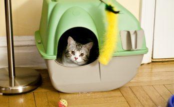 Проблемы с приучением кошки к месту