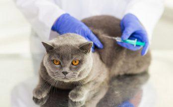 прививки для кошки