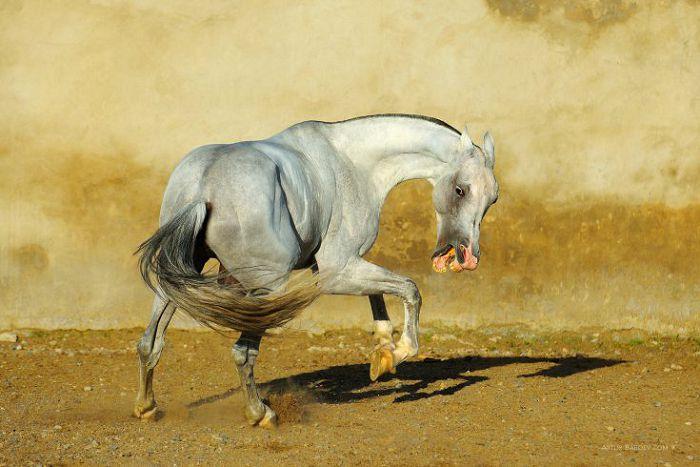 агрессивная лошадь