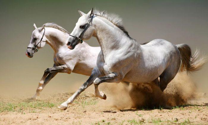 Лошадиные