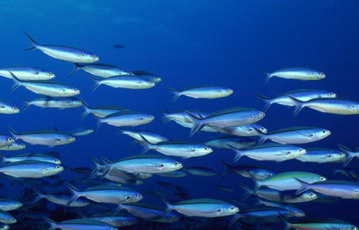 Миграции рыб