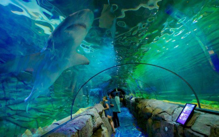 Океанариум AQWA в Австралии