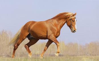 Походка лошади