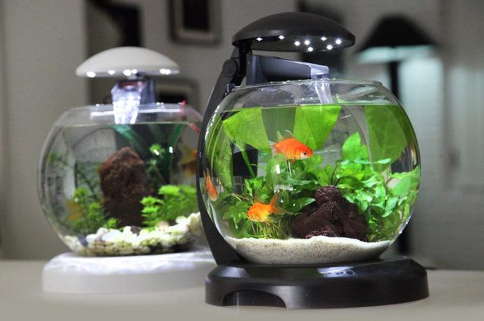 шарообразный аквариум