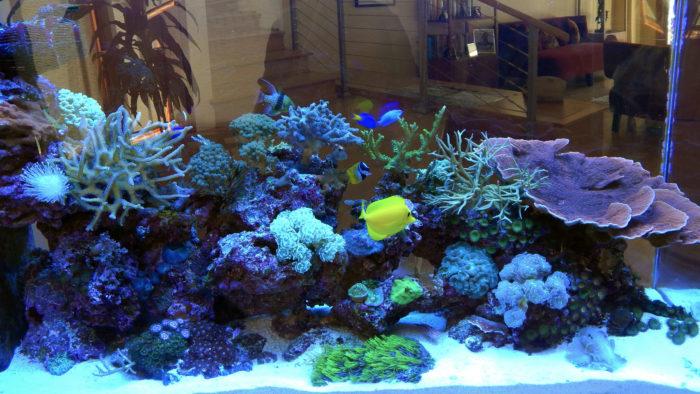 Биотоп кораллового рифа