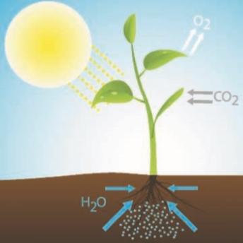 Схема обмена веществ в растении
