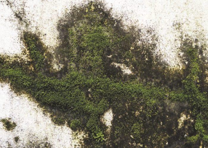 Простейшие водоросли