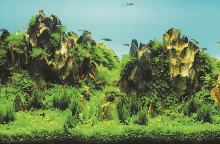 Аквадизайн в стиле «каменный контраст»