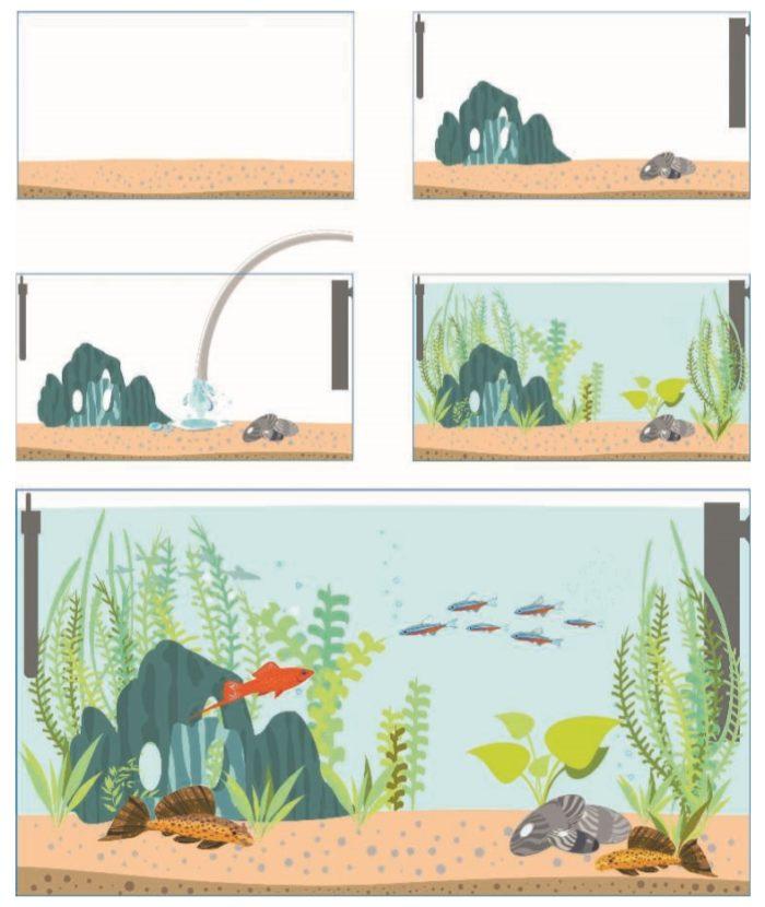 Этапы оборудования аквариума с нуля