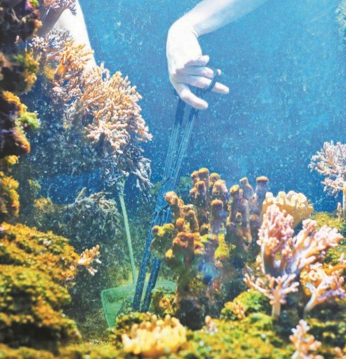 Работы по обслуживанию аквариума «псевдоморе»