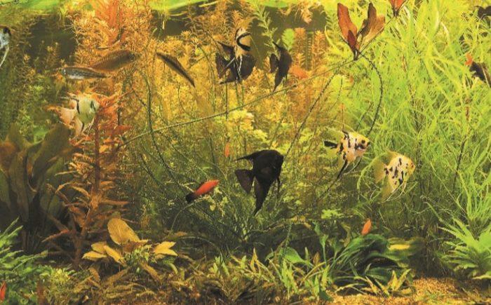 Аквариум с рыбами из Южной и Центральной Америки