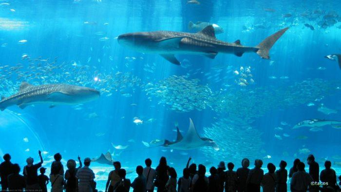 Японский океанариум в Окинаве