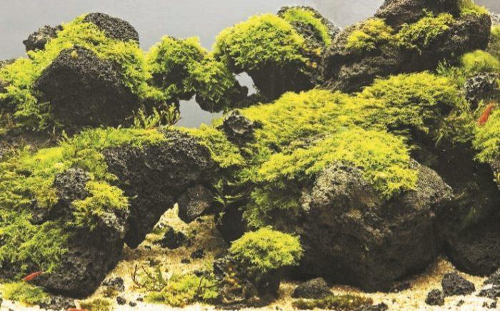 Одно из произведений аквадизайна Такаши Амано
