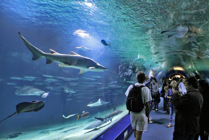 Океанографический парк (L'Oceanografic) в Валенсии