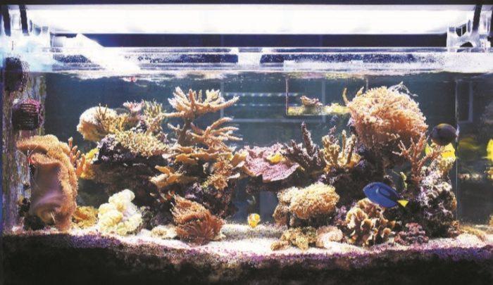 Осветительные лампы в аквариуме