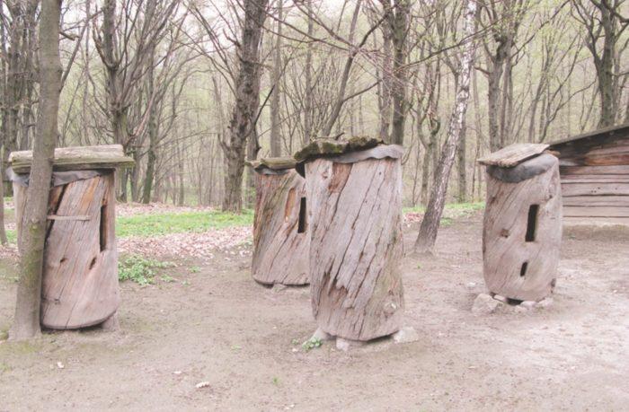 Старинные колоды с пчелиными семьями