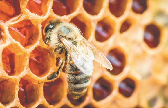 подкормка для пчел