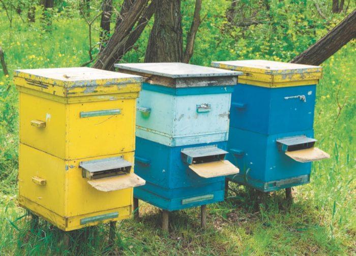 Три пчелиные семьи