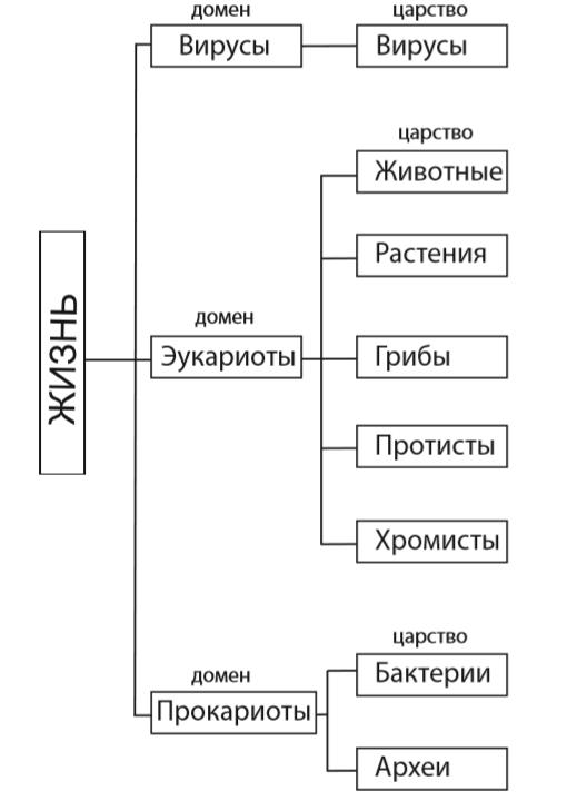 Классификация органического мира (Кавалье-Смит, 1998 г.)