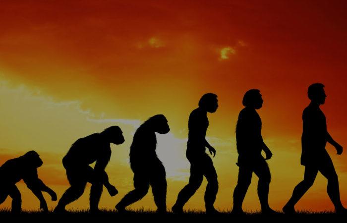 эволюция