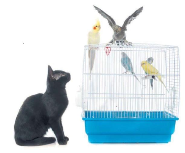 кошка и домашние птицы