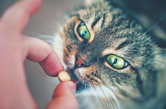 кошке дают таблетку